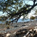 Seal Bay Nature Park, Comox Valley
