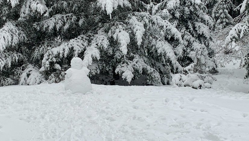 Family Day Snowman - Northeast Woods